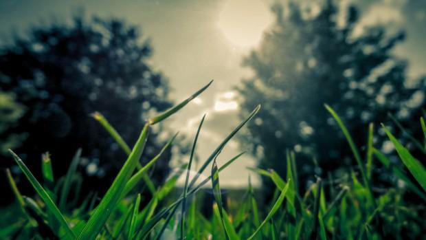 blade-of-grass-landscape-lens-flare-479-977x550
