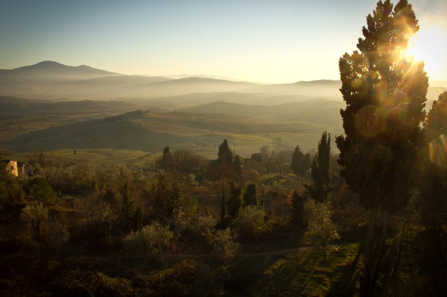 evening-forest-landscape-397-825x550